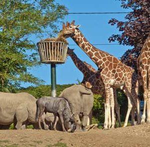 Une journée Spécial à ZooSafari de Thoiry Le Lundi 31 Août 2020